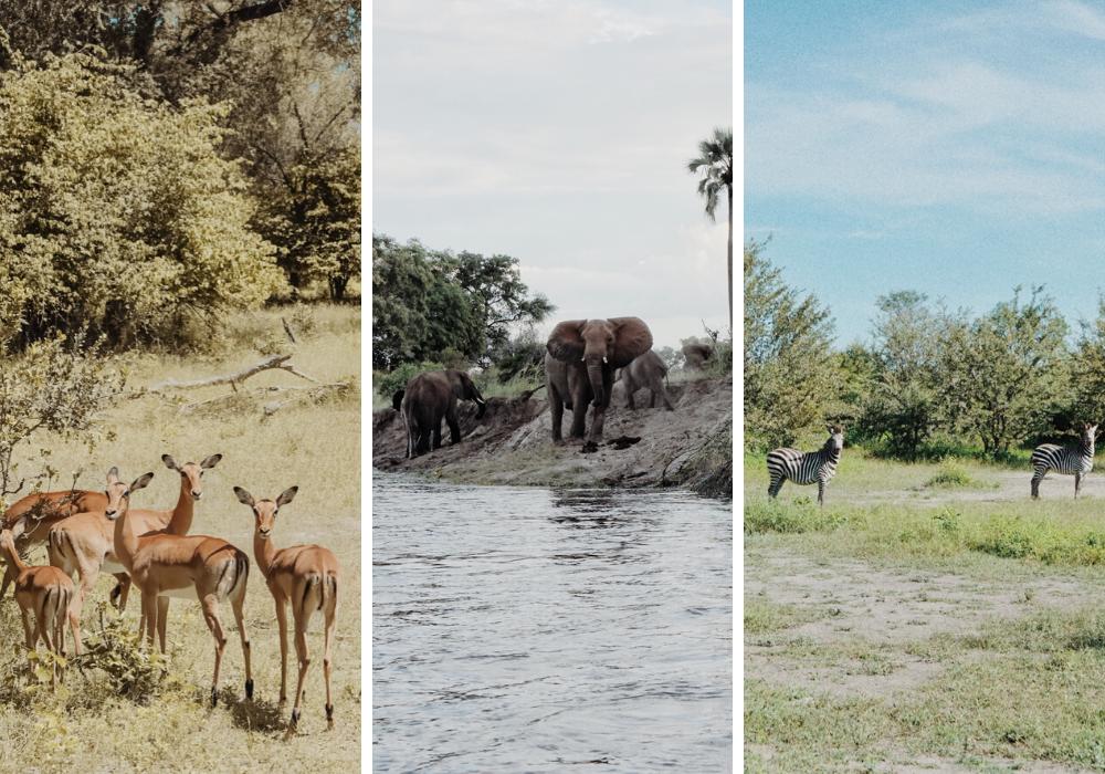 Tongabezi, Zambezi River, Victoria Falls, African Wildlife Safari